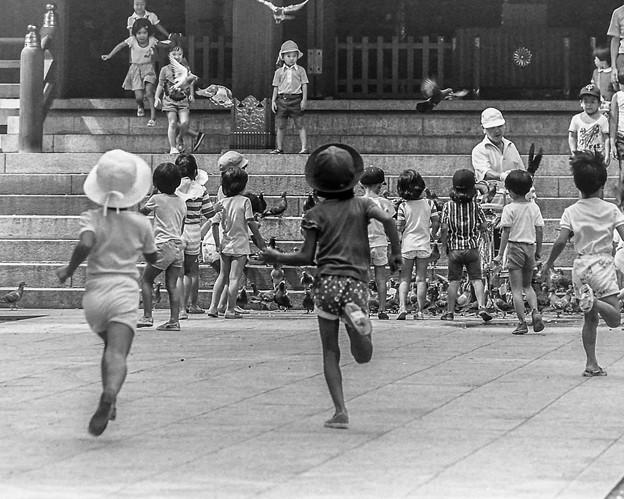 鳩に群がる子供たちの躍動感