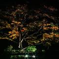 Photos: 大磯紅葉ライトアップ2012@SIGMA-DP2Merrill-3