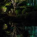 Photos: 大磯紅葉ライトアップ2011@NIKON-D5100