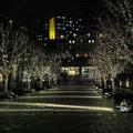 恵比寿ガーデンプレースのイルミネーションの並木