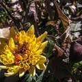 この時期は黄色い花が多いってさ