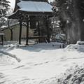 Photos: 雪がばさっと落ちた瞬間
