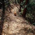 Photos: 猫のハイキング1