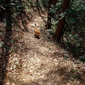 猫のハイキング1