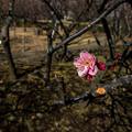 写真: 世を照らす花