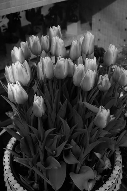 花はモノクロに限るな。バキッ!!☆/(x_x)