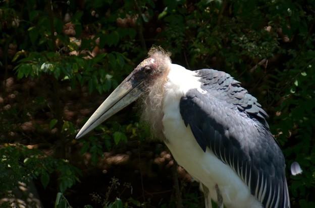 哲学者か、鳥の「お茶の水博士」か(爆)