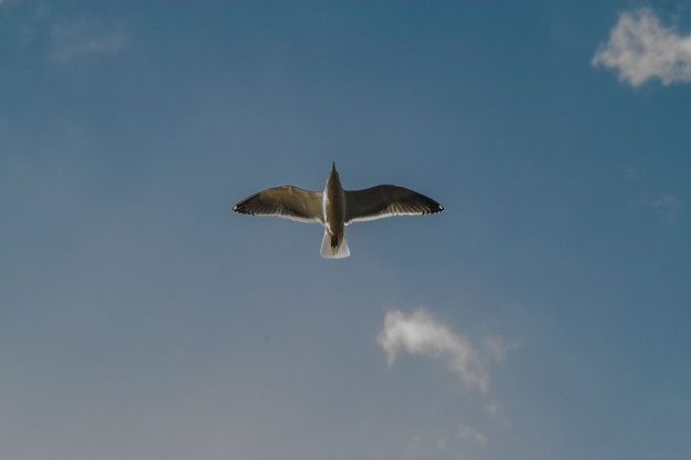 空に浮かぶ十字架@皇居のユリカモメ