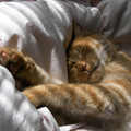 Photos: 猫熟睡