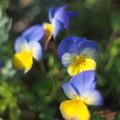 Photos: 春の風