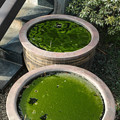 Photos: 緑の春2