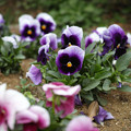 花と「眼が合った」(爆)