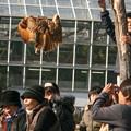 Photos: 空中静止!