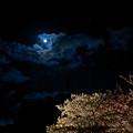 二条城の夜桜2011-2