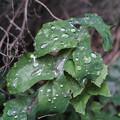 雨粒が無ければ撮らなかった、、