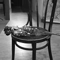 Photos: a dried flower-2