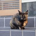 アヴァンギャルドな模様の猫さん