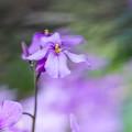 Photos: 春の風2