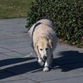 写真: 影とお散歩