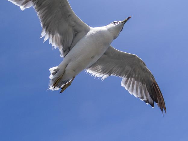 飛んで飛んで飛んで飛んで、、、