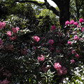 Photos: 愛の花