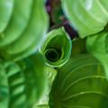 Photos: Green Spiral