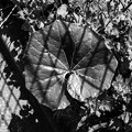 The Leaf in the Prison