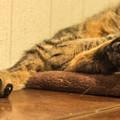 Photos: 黒い肉球と爪が、動物の顔に見える(爆)