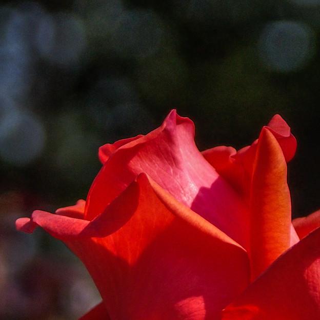 Photos: 赤い誘い