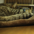 Photos: 尻尾を(爆)
