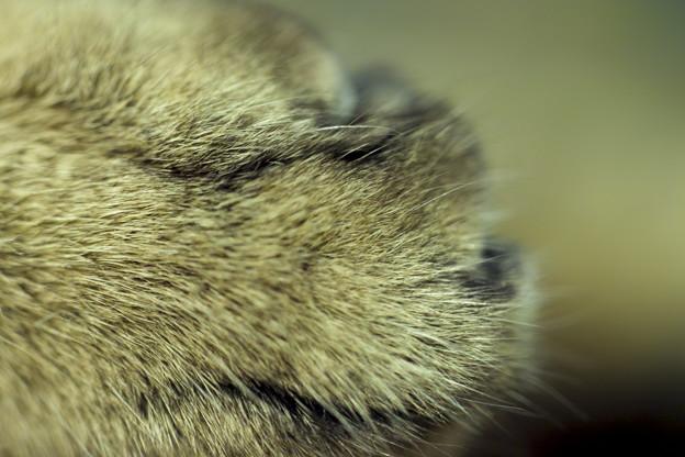右を向いた眼を瞑った獣の顔