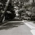Photos: 招き猫発祥の地、豪徳寺