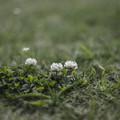 Photos: 春の地面