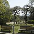 Photos: 公園のベンチ
