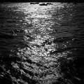 写真: 陽光に浮かぶ
