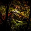 Photos: 紅葉ライトアップは高揚する(爆)