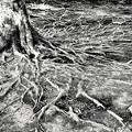 Photos: 木の「血管」(爆)