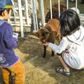 Photos: 猫羊!