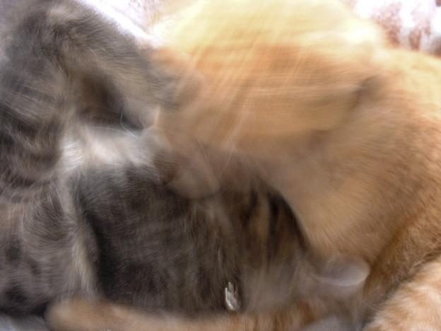 超高速猫キック炸裂