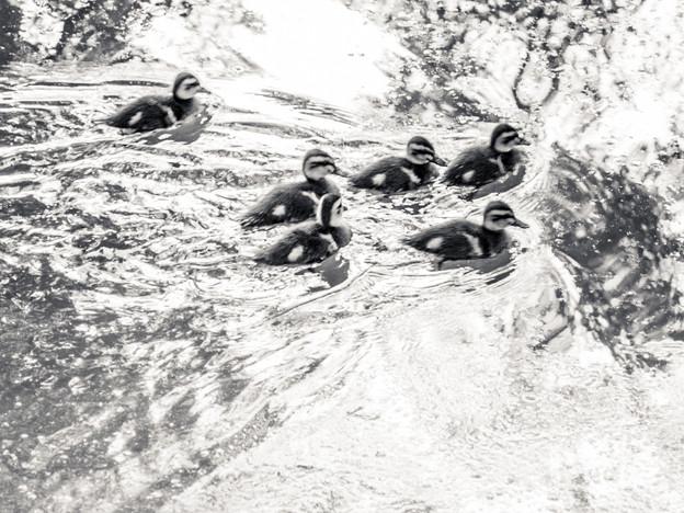 水上レース