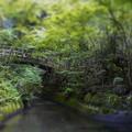 Photos: 水の精、樹の精が居そうだね(爆)