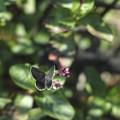 鱗粉が綺麗