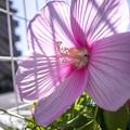 花びらの透過光を撮ったら虫さんが