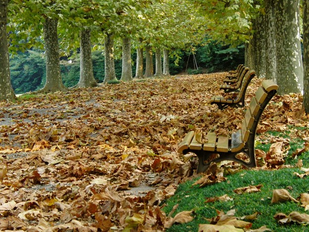 Photos: 晩秋の枯葉の絨毯