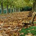 晩秋の枯葉の絨毯