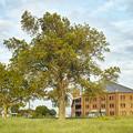 煉瓦と樹木