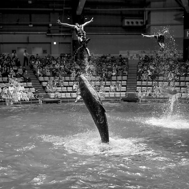 イルカと一緒にジャンプ!1@EPSON品川アクアスタジアム12