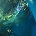 まるで水の中から撮ったみたいだ@EPSON品川アクアスタジアム-16