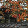 飛騨古川の紅葉