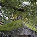 Photos: 飛騨国分寺の境内にて